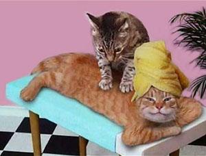 massaggio vignetta